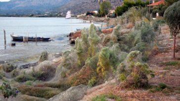 Spiders invaded greek village
