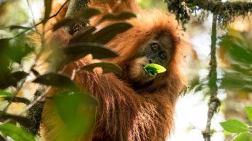 boycott palm oil