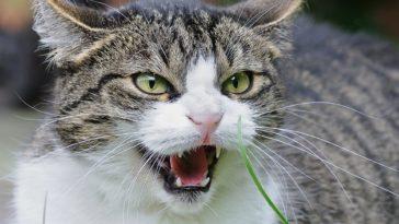 psychopath cats