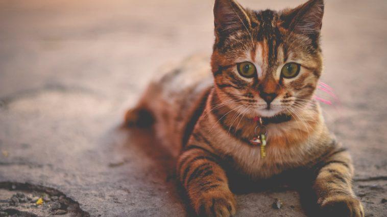 cat's name